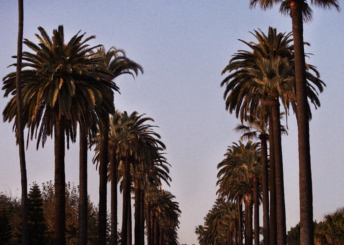 palmtrees_02