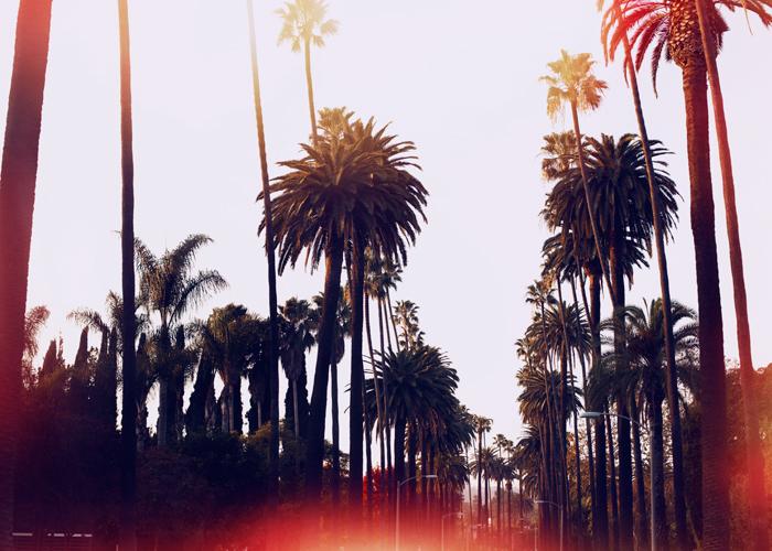 palms_la