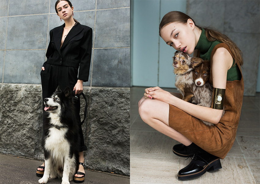 fashion-dogs_01