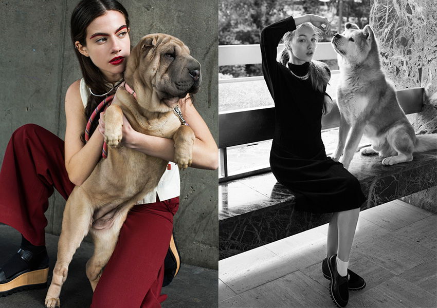 fashion-dogs_05