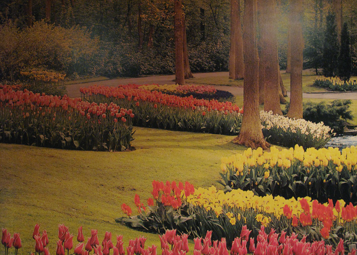 Illusion of Spring