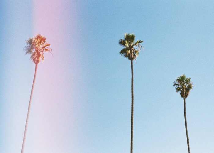 In front of us: L.A. trees