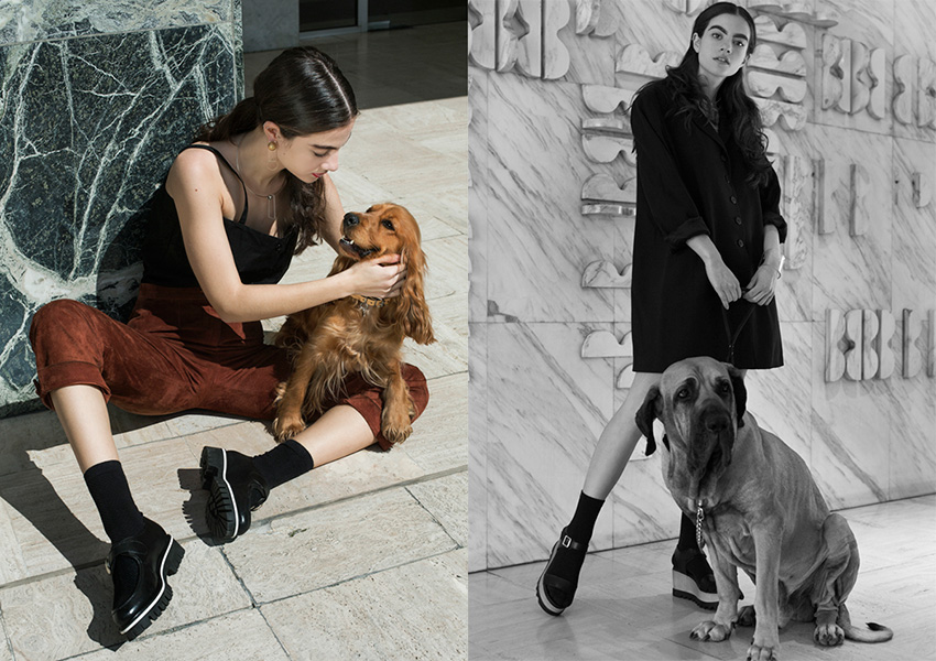 fashion-dogs_04